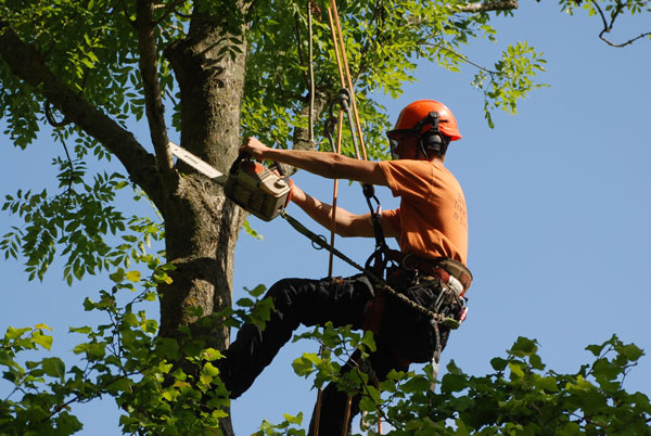 Tree Surgeons---Experts At All Types Of Tree-Care Work!
