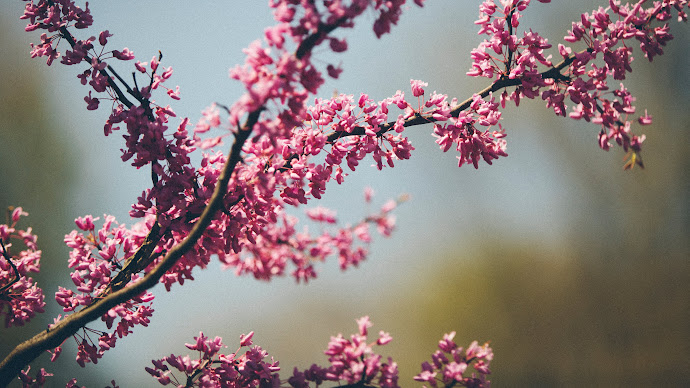 Wallpaper: The Pink of Spring