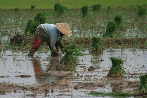 FEED Mobile: Program yang Membuat Petani Sejahtera