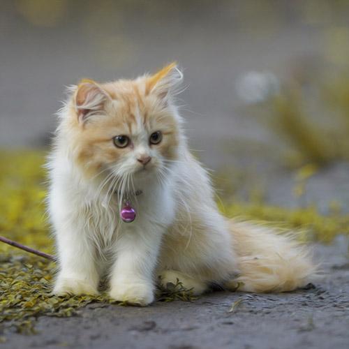 Nama Kucing Yang Bagus Untuk Anabul Kesayangaan