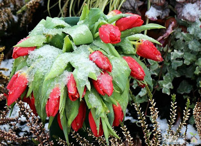 Storing Plants Outdoors During the Winter