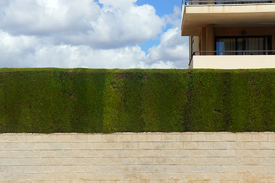 privet, garden, sky, travel, Spain, Espana, urban photography, art, contemporary, Sam Freek,