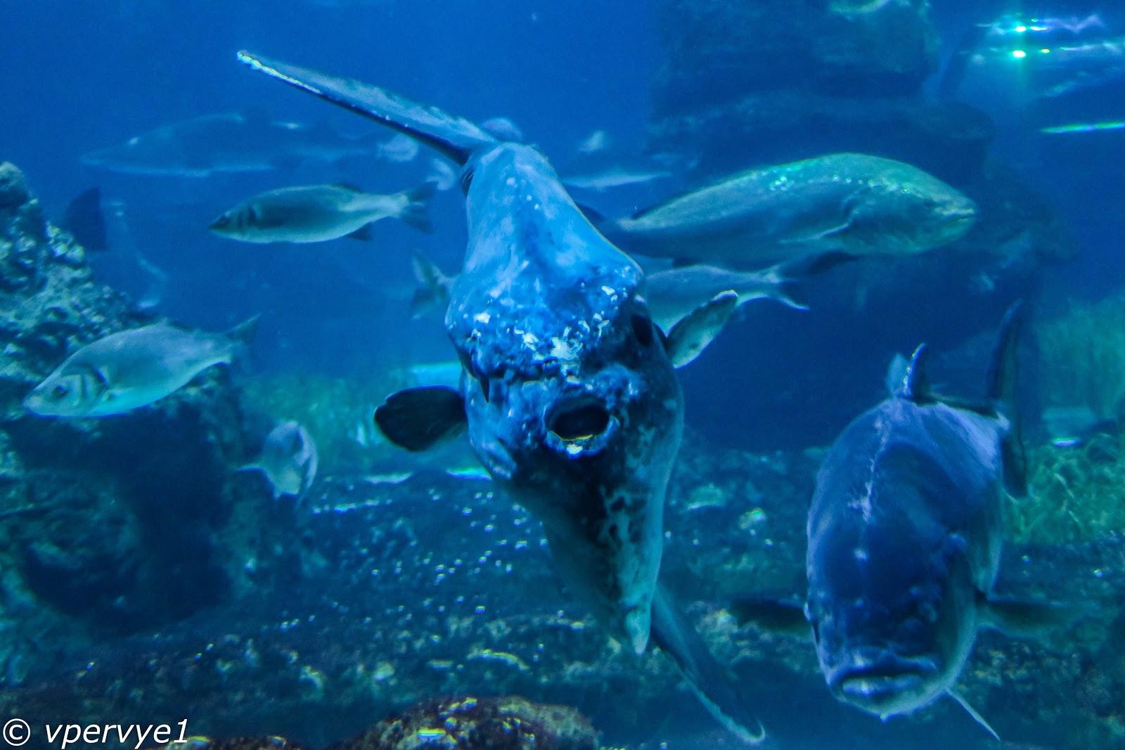 Ух ты! Доисторическая рыба!