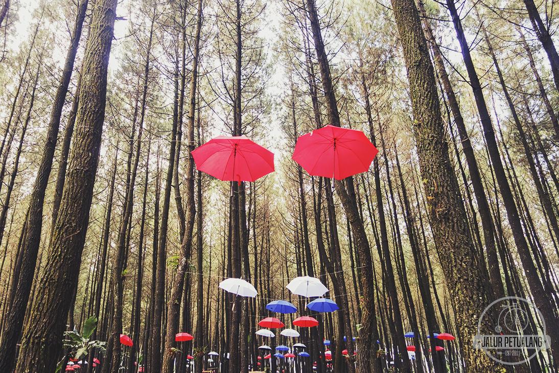 Hutan Pinus Semeru Destinasi Wisata Baru Di Wajak Malang Ngalam Co