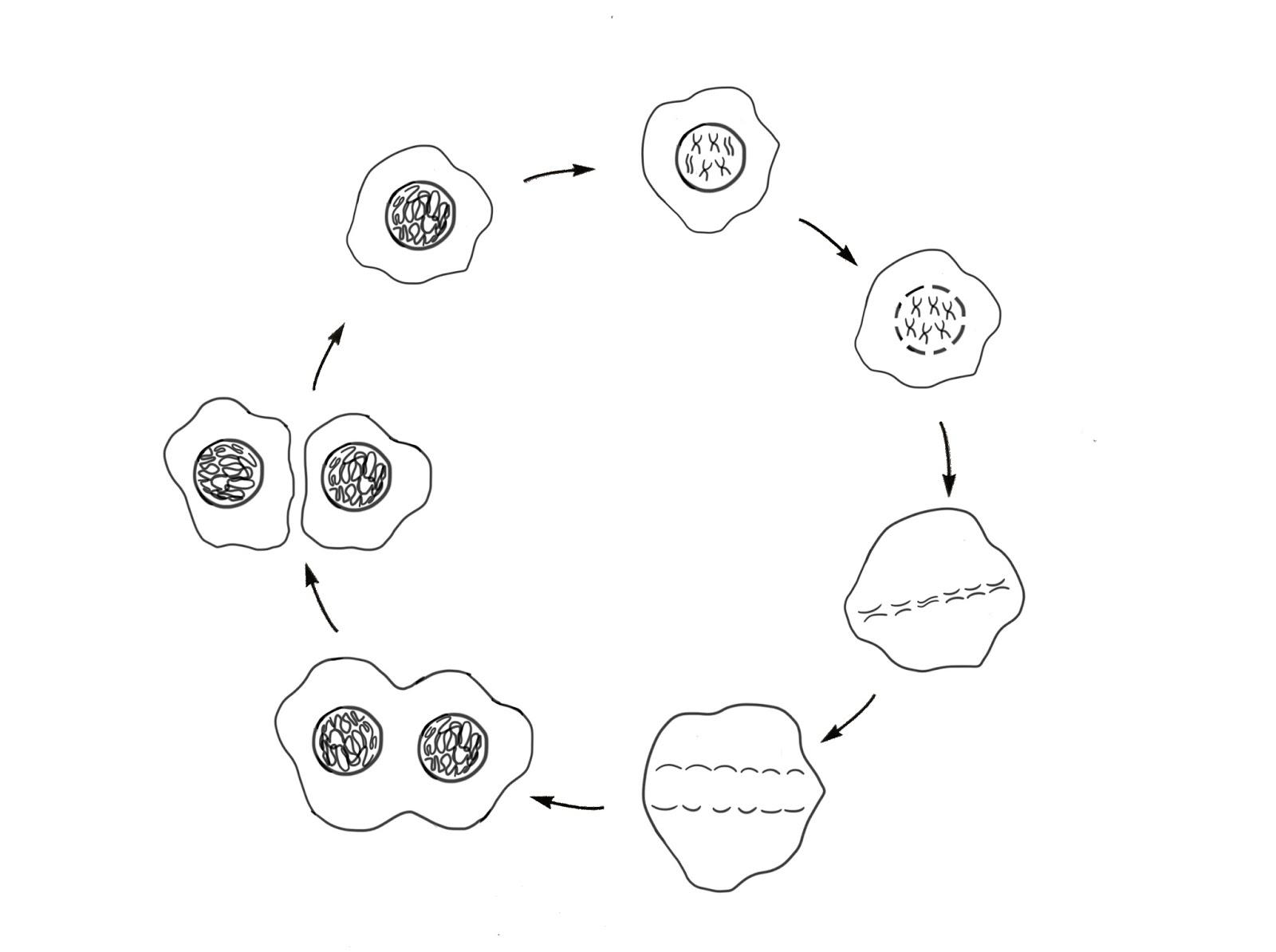 Joshua E Cohen Portfolio Science Teacher Worksheet For