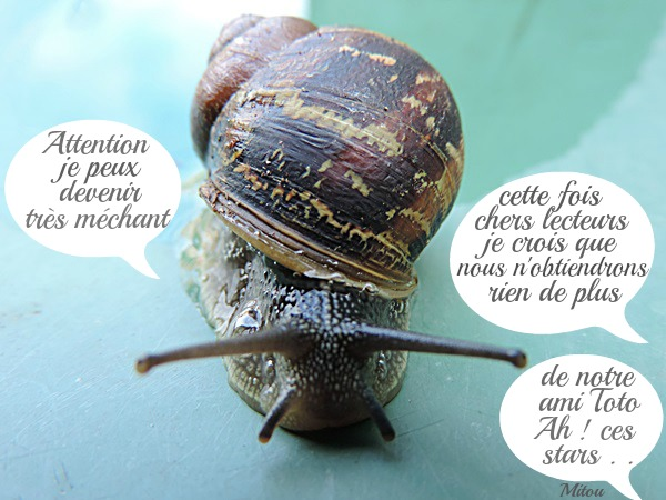 Mitou la bretonne toto l 39 escargot - Toto l escargot ...