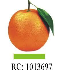 Orange Insurance Brokers Recruitment