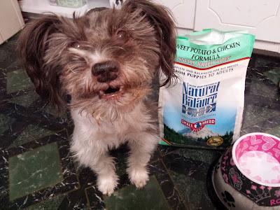 Pixel Blue Eyes standing next to her Natural Balance dog food and food bowl