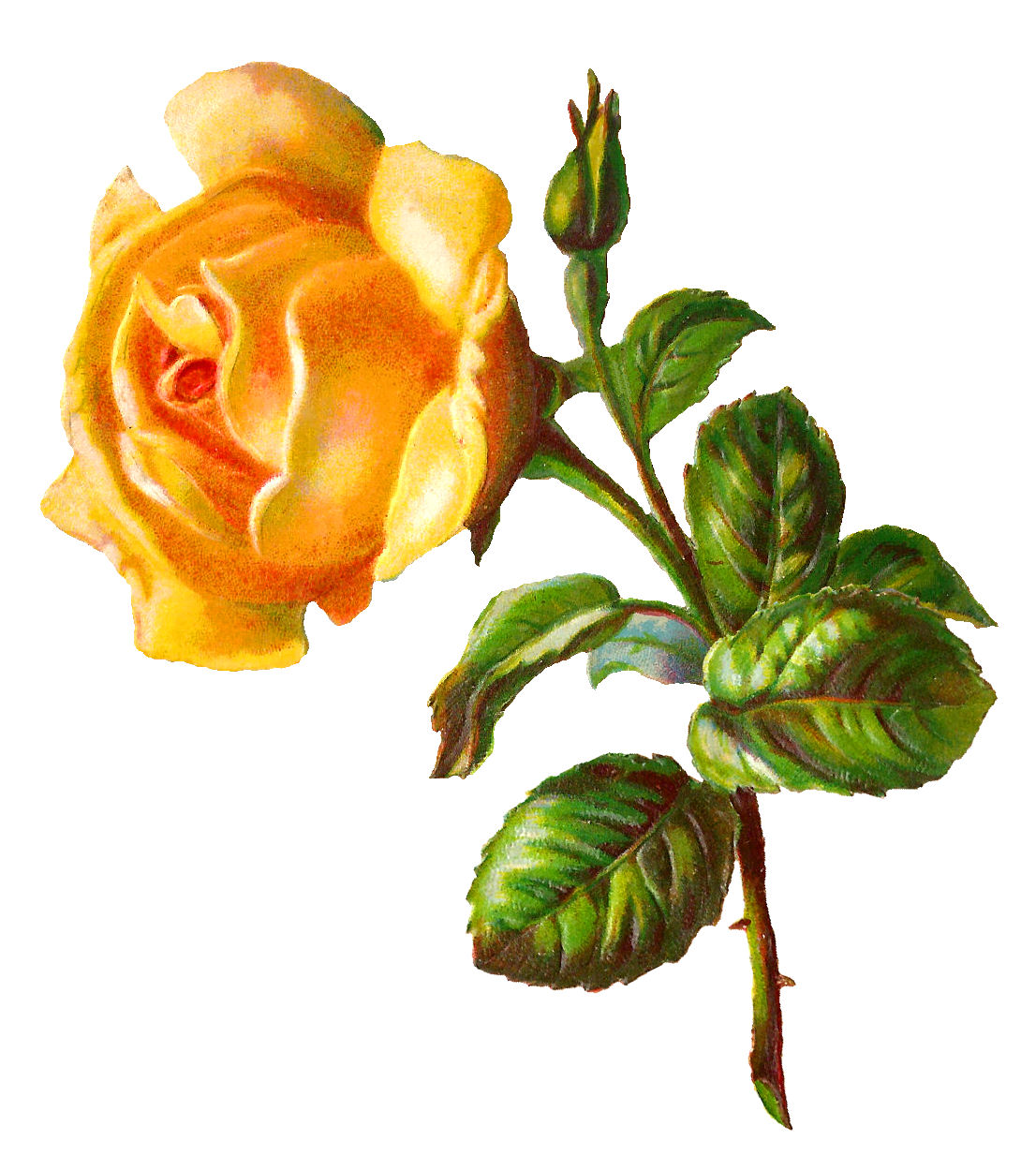 Antique Images: Digital Yellow Rose Image Printable Flower Clip Art