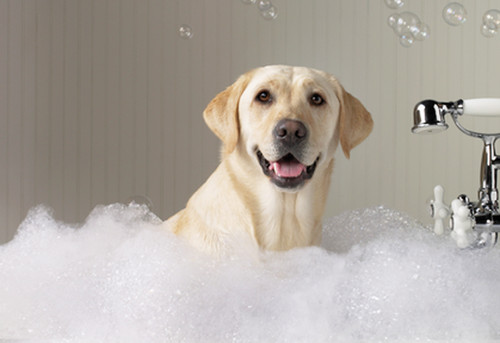 mascotas-7-pasos-para-baar-a-tu-perro-mascotas-pasos-para-baar-a-tu-perro