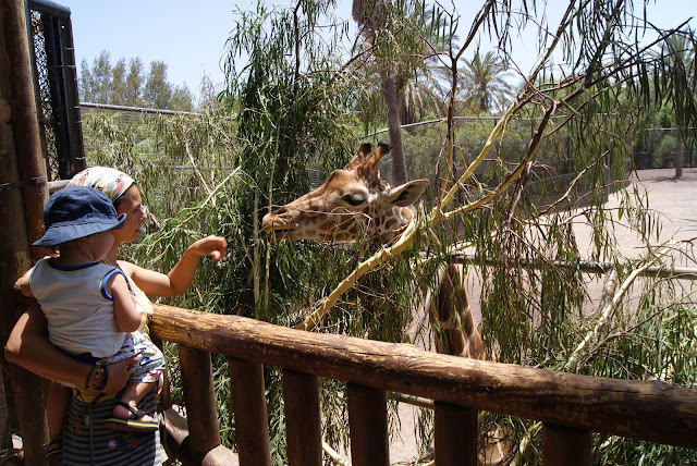 Jirafas en el Oasis Park de Fuerteventura