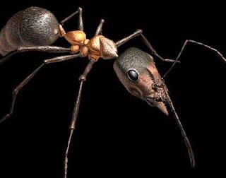 Hormiga Titanomyrma giganteum macho
