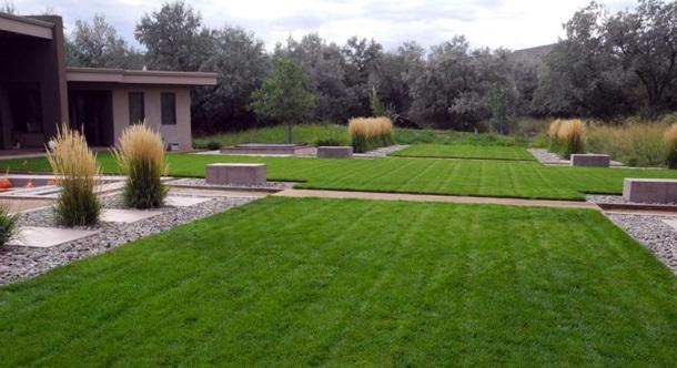 газон во дворе
