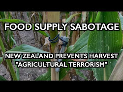 AGRICULTURAL TERROR: New Zealand Blocks Farmworkers, Leaves Crops to Rot