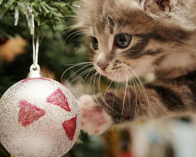 fotos de gatos mirando las bolas del árbol de Navidad