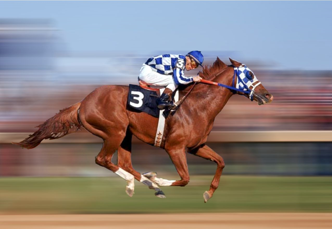 Image Result For Preakness
