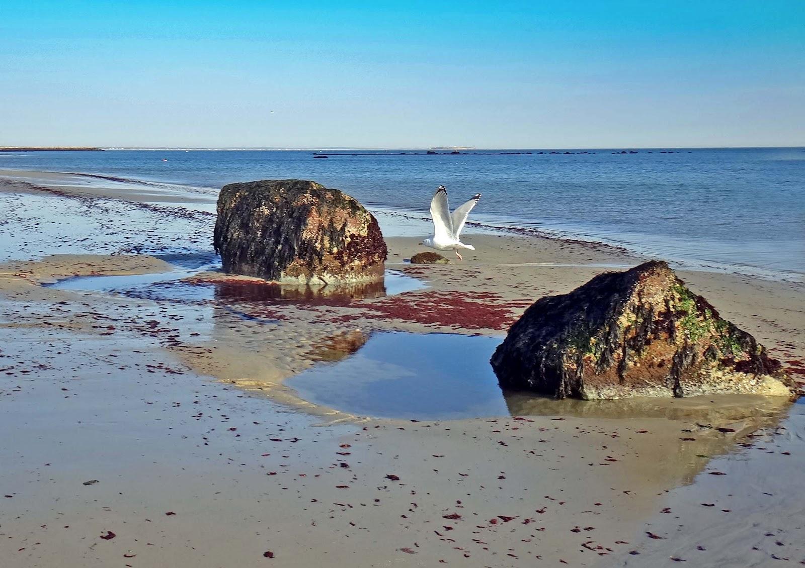 White Horse Beach Rock Garden Plymouth Machusetts Usa