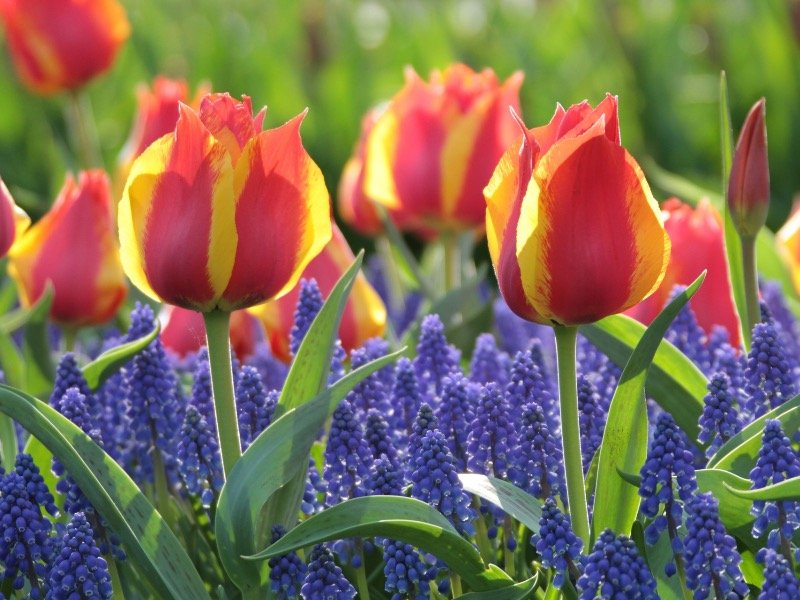 The 10 Best Early Spring Bloomers To Plant This Fall