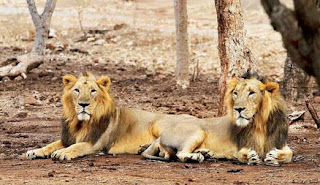 gir national park gujarat,gujarat gir national park