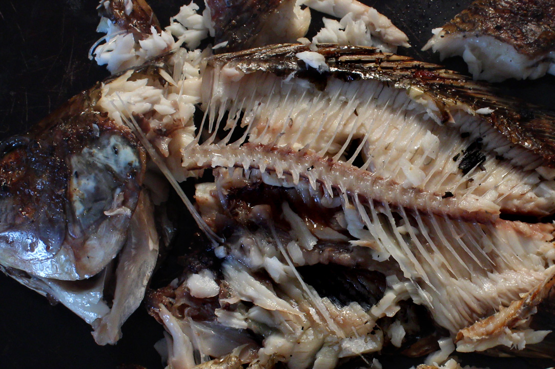 The 99 cent chef for Fish bones restaurant