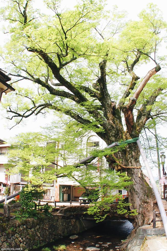 兵庫県丹波市柏原町観光 木の根橋