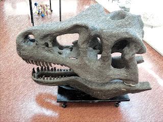 Cabeça de Dinossauro - Museu de Geociências da Usp - São Paulo