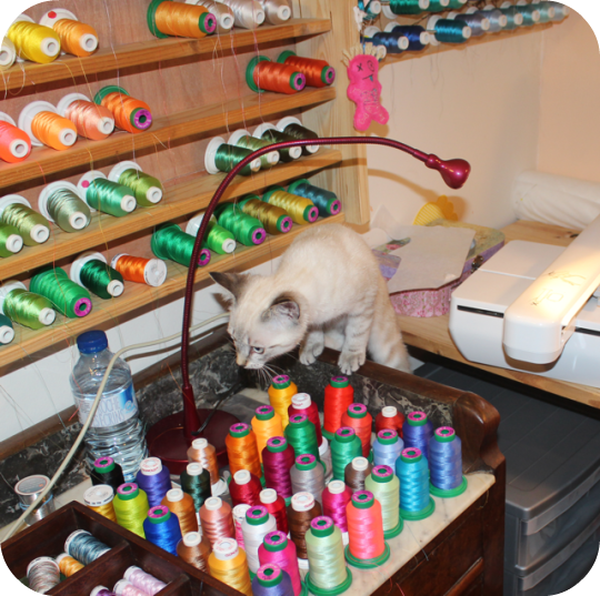 atelier de couture, sewing workshop,kitten, threads, embroidery threads, chaton, fil à broder,