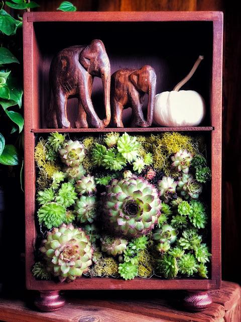 Ogród wertykalny w miniaturze - mini ogródek DIY dla każdego.