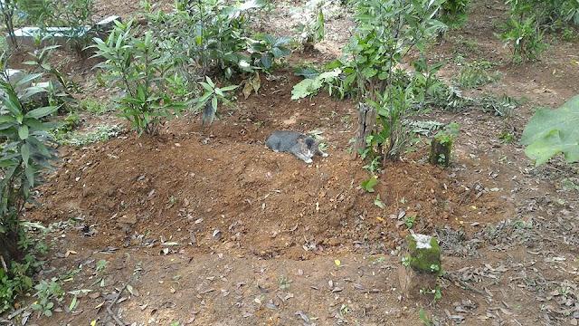 Kucing Enggan Tinggalkan Kuburan Tuannya
