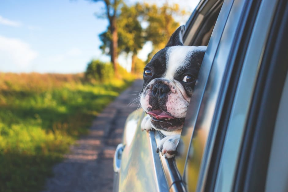 weeeee - Top Important Tips On Traveling With Your Pet