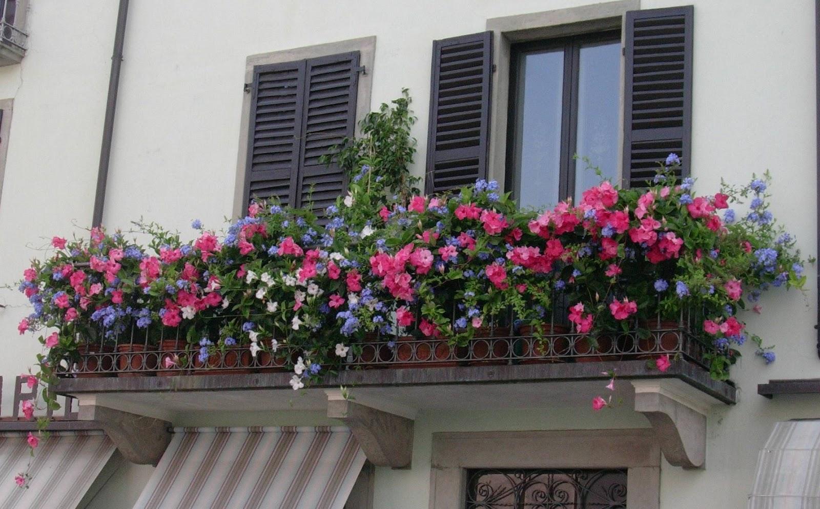 Un piccolo giardino in città: Balconi fioriti