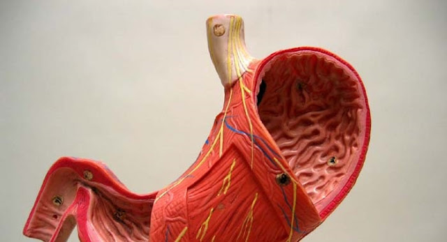 وصفات طبيعية مفيدة لعلاج قذف دم المعدة