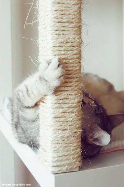 Truques para quem tem gatos em casa!