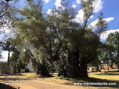 The Atrium of the olives in Tzintzuntzan