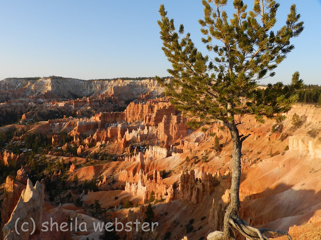 The sunrise casts a warm glow on the hoodoos