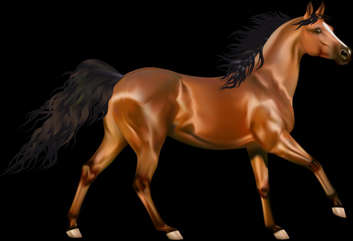 Musings At Minkiewicz Studios Llc Equine Anatomy And Biomechanics