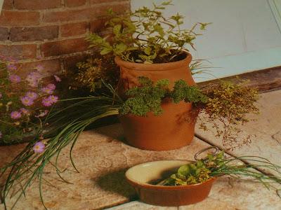 глиняный горшочек с ароматными травами