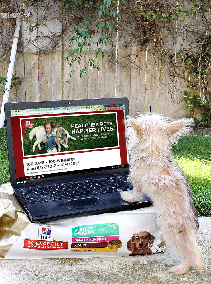Enter to win $100 towards your pet's next veterinary visit with #HillsTransformingLives. #AD https://goo.gl/FxyGzw