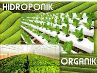 Perbedaan tanaman hidroponik dan organik
