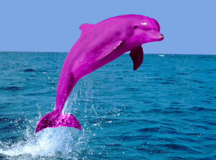 Pink dolphin picture