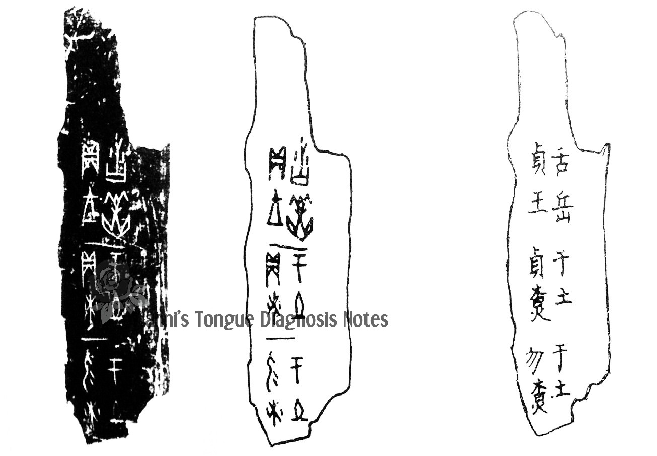 The Tongue In The Oracle Bones Of The Shang Dynasty