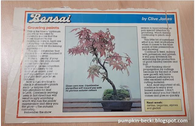 first Bonsai article read Clive Jones Amateur Gardener magazine 1988