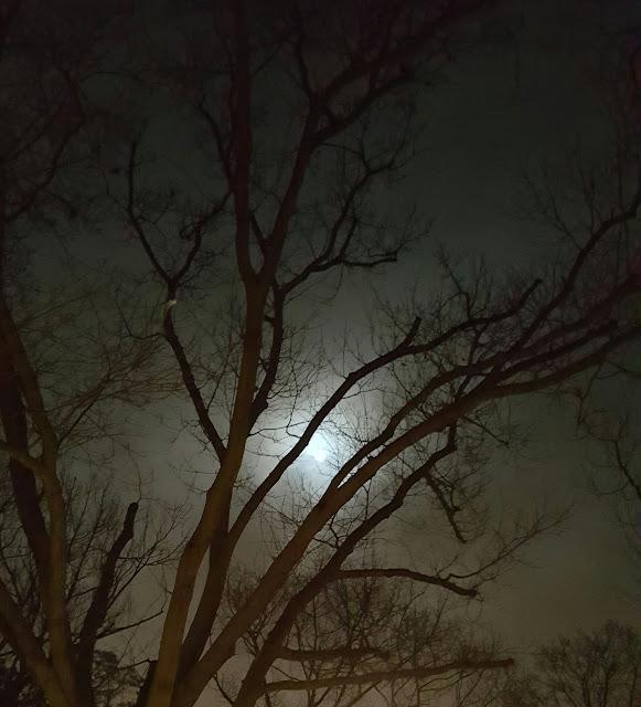 Vollmond leuchtet durch die Äste des alten Baum in Berlin Tempelhof