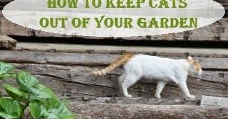 How to Keep Cats Out of Your Garden   Dreaming Gardens pub