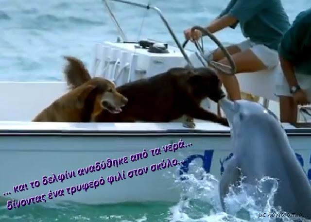 σκύλος-δελφίνι-φιλί-μια συγκινητική στιγμή-το φιλί ενός σκύλου κι ενός δελφινιού