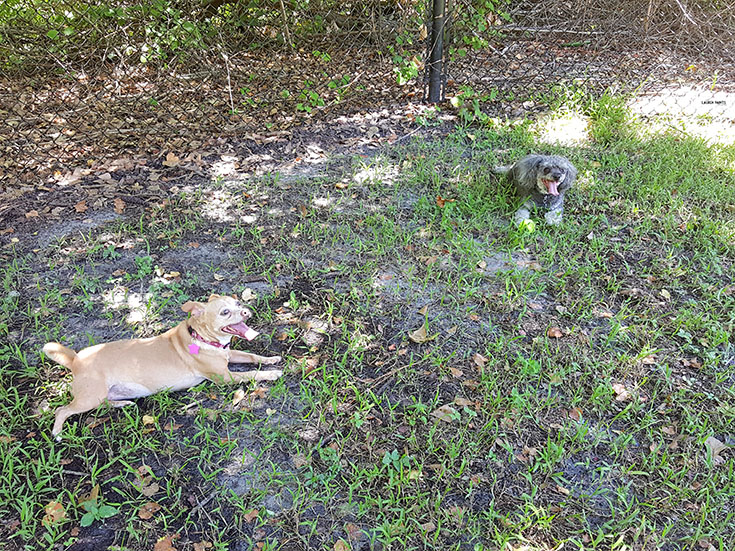 Every pup should have a dream dog park nearby their home. Find out how Beneful is making that dream a reality for many dogs and how you can score an awesome new park for your community... #DreamDogPark #FriendsofBeneful