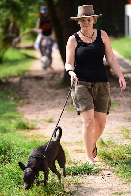 8h sáng, những tình nguyện viên đủ mọi lứa tuổi, đến từ nhiều quốc gia đã có mặt tại trung tâm để bắt đầu công việc. Bỏ qua những bãi biển thơ mộng, những địa điểm vui chơi giải trí hấp dẫn ở Phuket, họ dành phần lớn thời gian trong kỳ nghỉ để chăm sóc chó mèo. Đường đi bộ quanh hồ nước cũng được xây dựng để tập luyện cho chó quen với việc được dắt dây đi dạo với người khi đưa đến nơi ở mới.