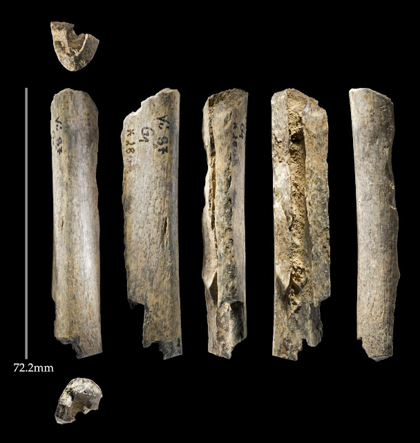 Late surviving Neanderthals 'much older' than previously thought