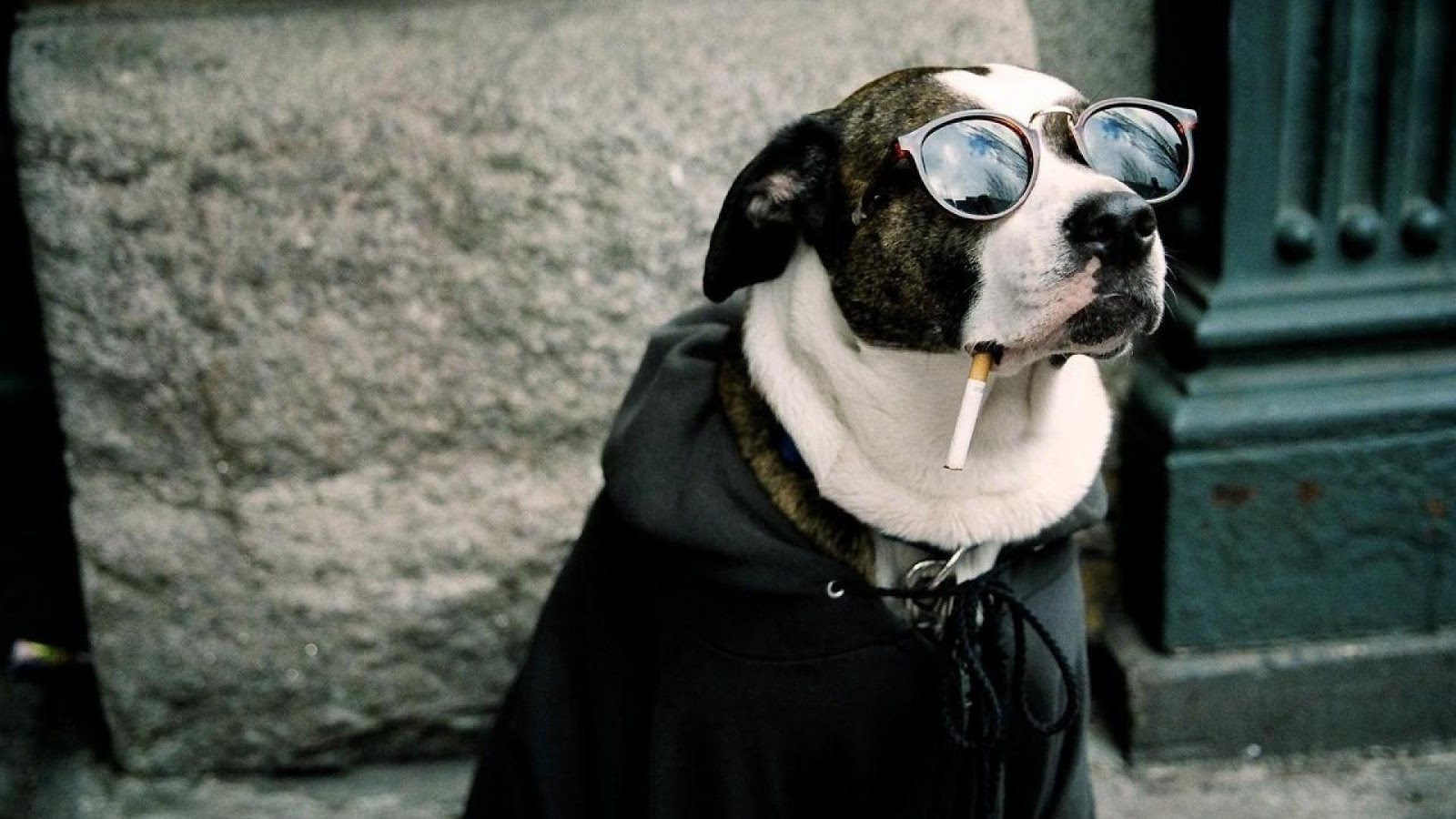 funny dog hd wallpaper - photo #1