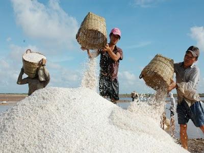 Muối Bà Rịa Vũng Tàu là muối tốt nhất để ủ nước mắm